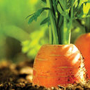 Composts and soil additives