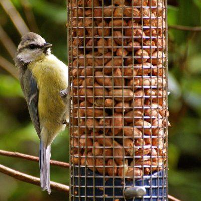 Feeders & Bird Tables