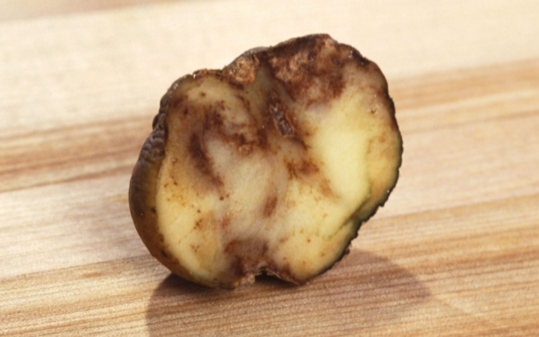 Potato Blight Information