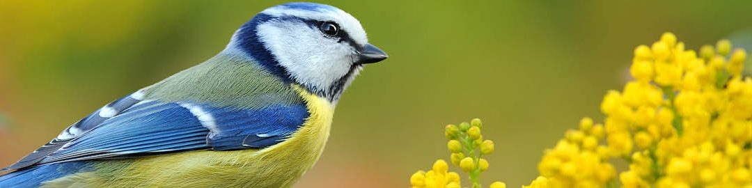 Attract birds and feed your garden naturally
