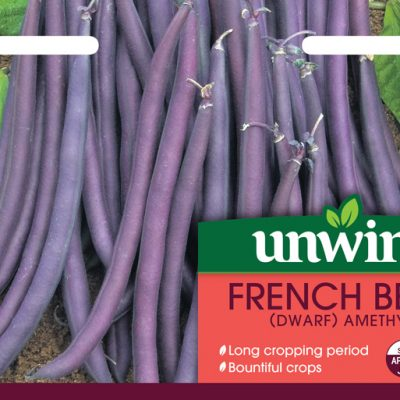 Unwins Seeds French Bean Amethyst
