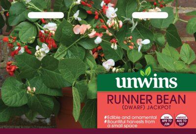 Unwins Seeds Runner Bean Dwarf Jackpot
