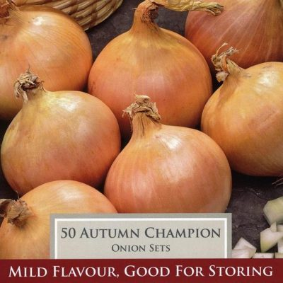 Autumn Champion Onion Set