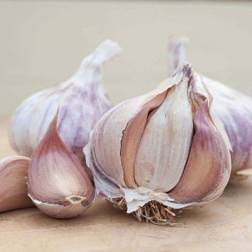 Germidour Garlic